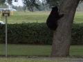 bear-11-21-14-1
